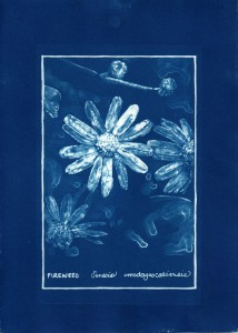 cyanotype011-for-web